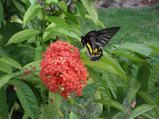Coconut Creek Farm and Homestay : Butterfly