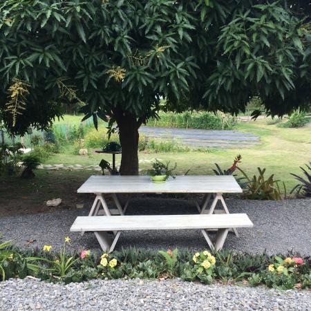 Carta Buena: Garden