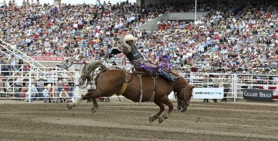 Calgary Stampede All You Need To Know Before You Go