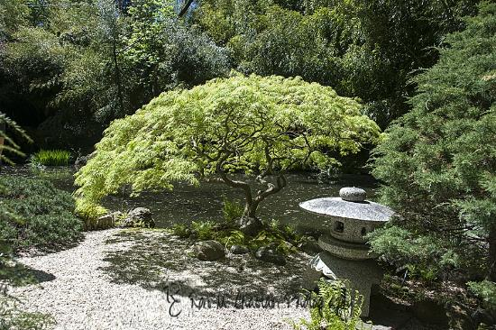 garden picture of john p humes japanese stroll garden locust valley tripadvisor