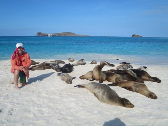 Galapagos Natural Life - Day Tours: Sea Lions resting in the sun. Note: No touching and 6 feet approach limit!