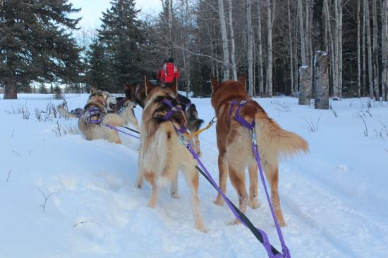 Rocky Mountain House, Kanada: Puppies on the run