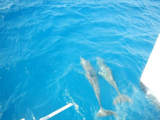 Island Routes Caribbean Adventures - Jamaica: Dolphins!