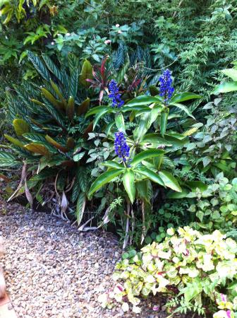 Witta, Australië: Beautiful flowers