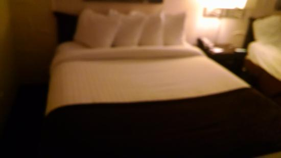 Best Western Albany Airport Inn : bed
