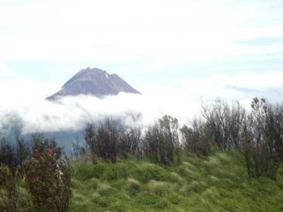 Mount Merbabu National Park: View merapi