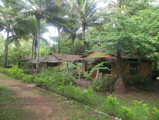 Canopy Nature's Nest Goa