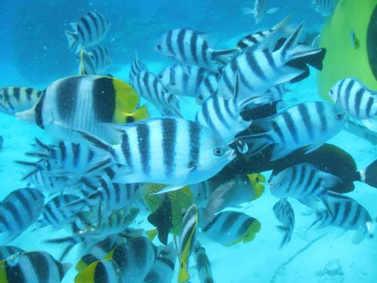 Aquabike Adventure : Bora Bora Aquabike Feb 2015