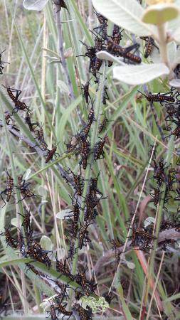 Isalo, Madagaskar: Les insectes