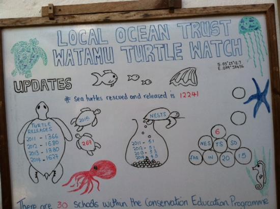 Watamu Turtle Watch: Impressive Progress