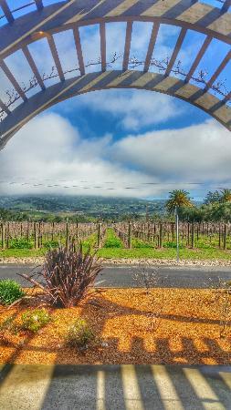 Black Stallion Winery: Beautiful view