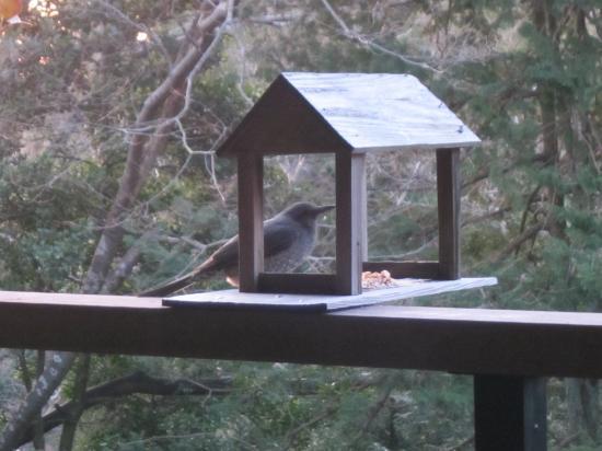 ベランダには鳥の餌場があります...