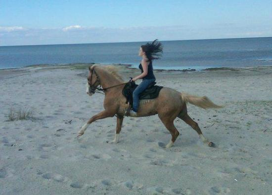 Outer Banks Riding Stables: One of the best horses I've ridden, Sunny.