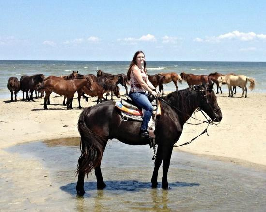 Outer Banks Riding Stables: Standing with island's wild horses!
