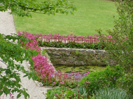 Plas Cadnant Hidden Gardens: looking down the the main pool in the walled garden...Bergenia's galore !