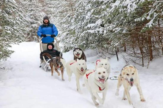 Pourvoirie du Lac Beauport: Dog sled picture from March 2014. Costs extra but worth it!