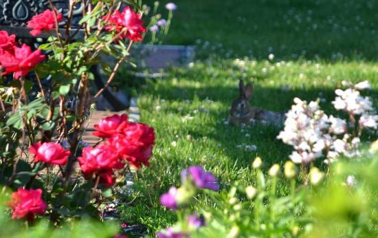 Union gables inn garden bunny saratoga springs ny picture of union photo union gables inn garden bunny saratoga springs ny mightylinksfo