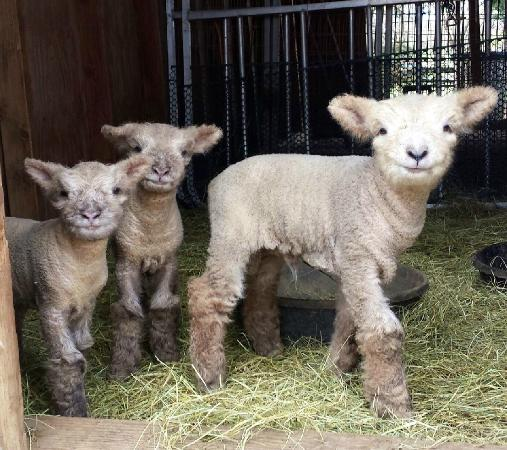 Ramona, CA: More babies (born Feb 2015), awwww!