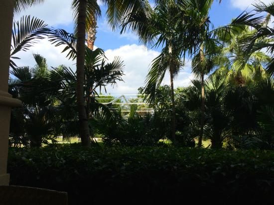 The Ritz-Carlton, Grand Cayman: View from my room - very private feeling