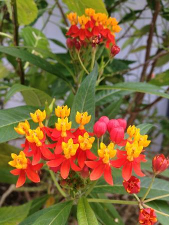 Deer Run Bed & Breakfast: Flowers in Garden