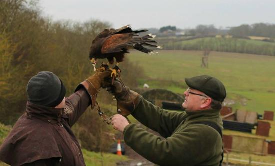 High Harthay Outdoor Pursuits: Harris Hawk Experience