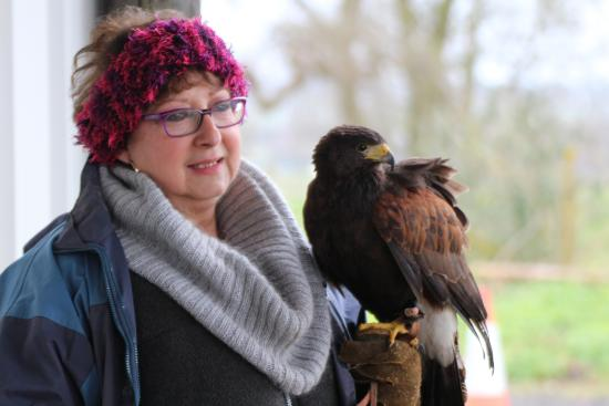High Harthay Outdoor Pursuits: Harris Hawk