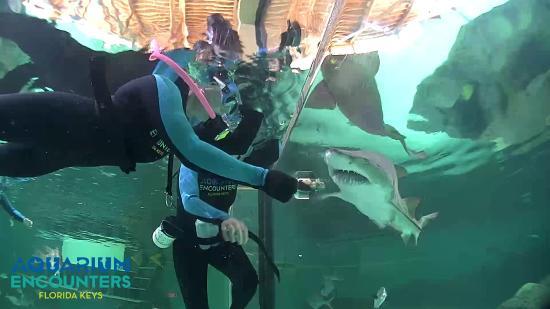Wowza Picture Of Florida Keys Aquarium Encounters