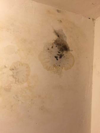 Paradise Inn & Suites: Mold or modern art growing on bathroom ceiling.