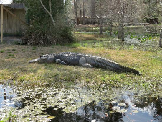 okefenokee swamp Straddling the georgia–florida border in the united states, the okefenokee  swamp offers intriguing wetland landscapes and wildlife like.
