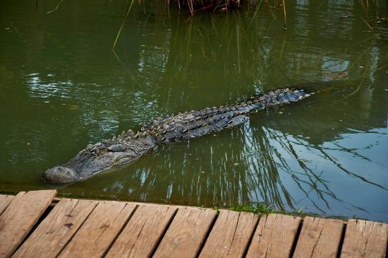 Natchitoches Alligator Park: Alligator Park