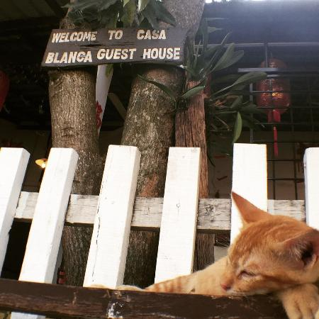 Casa Blanca Guest House : 入り口