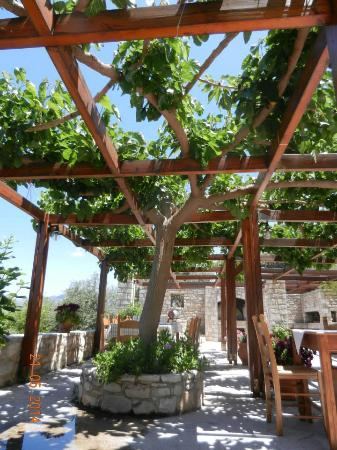 Dalabelos Estate: mulberry tree over the dining area