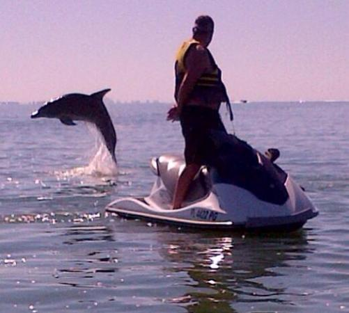 Holiday Water Sports: Dolphin Adventure Tour!