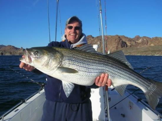 Stripers picture of adventure in angling las vegas for Fishing lake mead