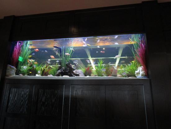 Cheddars Fish Tank In The Dining Room Near Entrance