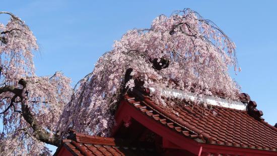 Myokanji Temple