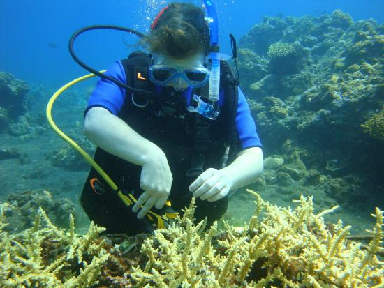 Tejakula, Indonesia: Cutting baby corals for transplanting