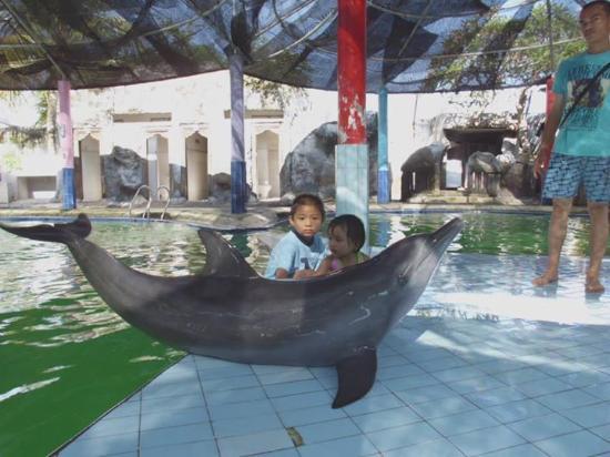 Melka Excelsior Resort Hotel: berfoto bersama lumba lumba