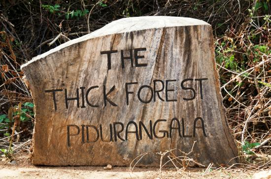 ‪‪Thick Forest‬: Name board‬