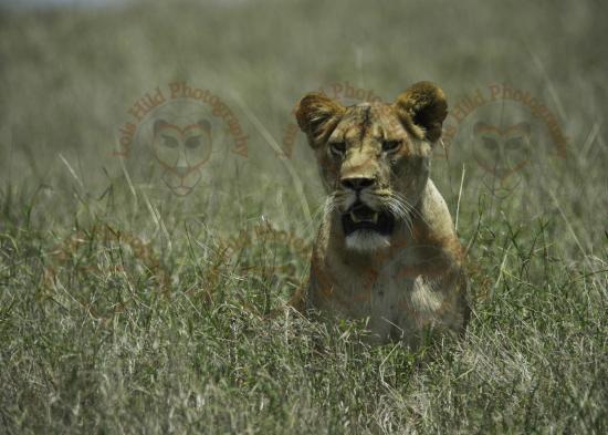 Lewa Wildlife Conservancy: Jamila