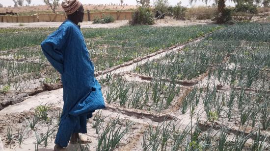 Zinder, Niger: Birni Quarter