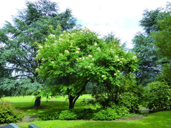 Arboretum Cimetière Parc