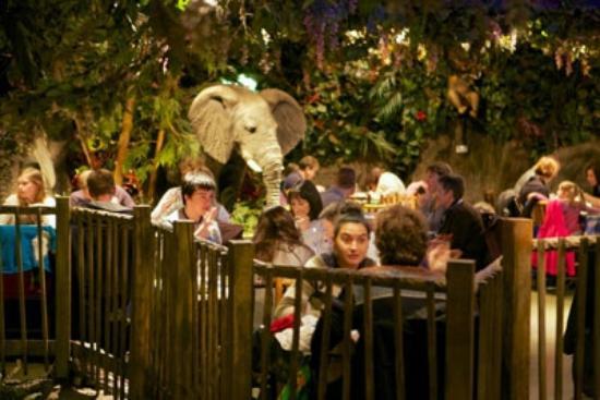 Rainforest cafe london omd men om restauranger for Rainforest londra