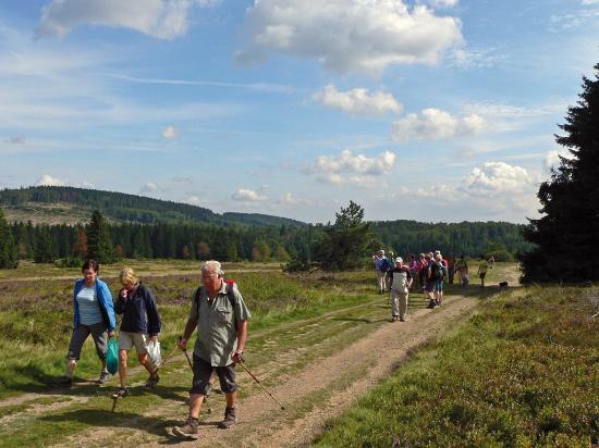 Gasthof Zum Diemeltal: Wandern
