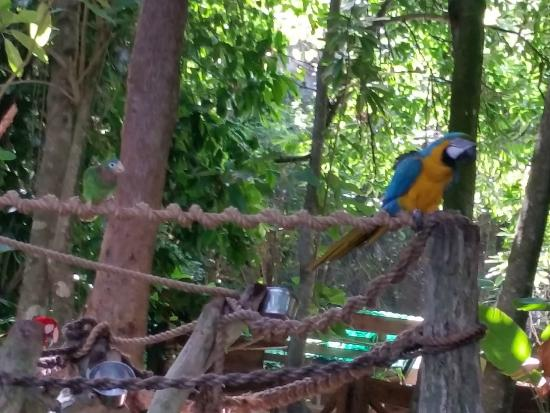 Dolphin Cove : One of the many tropical birds
