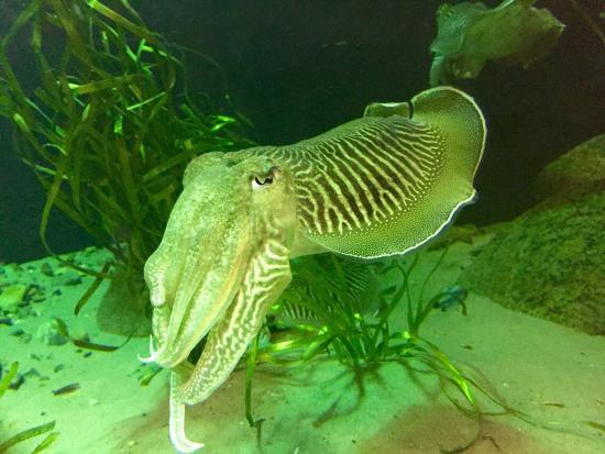 blæksprutten helsingør