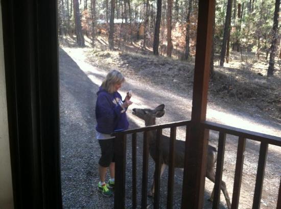 Dan Dee Cabins Resort: Our new friend