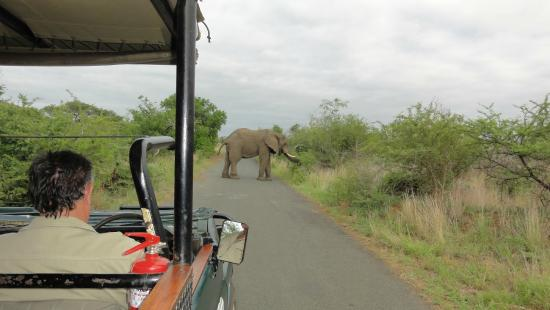 Wendy's Country Lodge: Early morning game drive with Gavin at the wheel