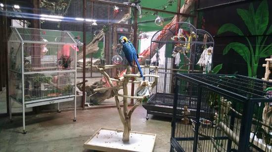 Beautiful Large Birds Picture Of San Antonio Aquarium