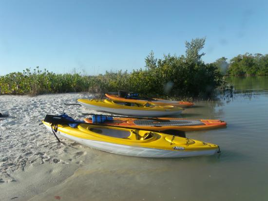 Estero, FL: Kayak and Paddle Board Rentals: Pelican Island